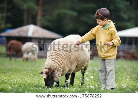 Cute little boy feeding a sheep - stock photo