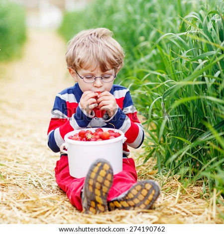 Cute little boy in glasses in glasses laughing and picking and red ripe strawberries on organic pick a berry farm in summer, on warm day. - stock photo