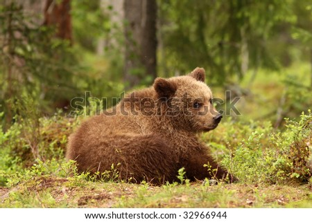 Cute little brown bear - stock photo