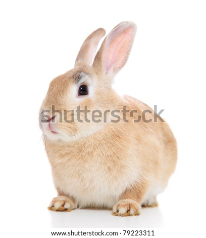 Cute little bunny. All on white background