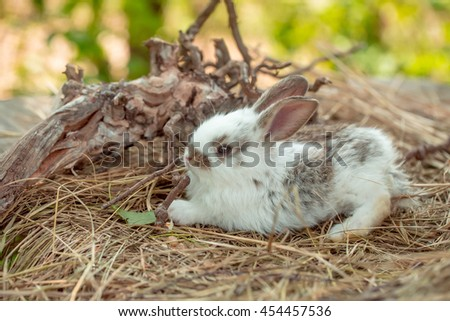 Cute little bunny rabbit and exposed roots on hay on natural background