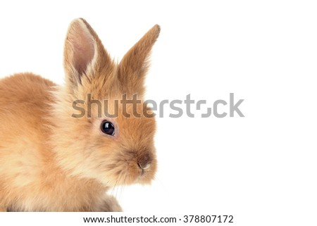 Cute little bunny rabbit isolated on a white background - stock photo