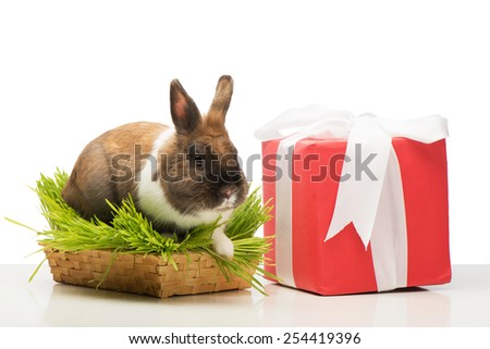 Cute little bunny sitting in grass near present box with white ribbon. Concept for holidays - stock photo