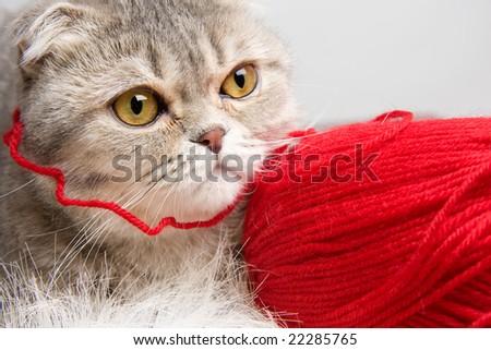 Cute little cat - stock photo