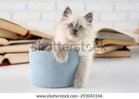 Cute little cat in box near books on light background - stock photo