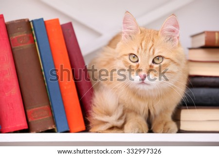 Cute little cat on shelf with books on light background - stock photo