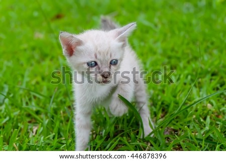 Cute little cat playing on green grass in the morning
