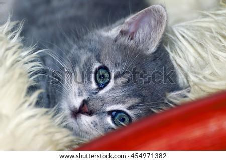 cute little cat sleeping on fur - stock photo