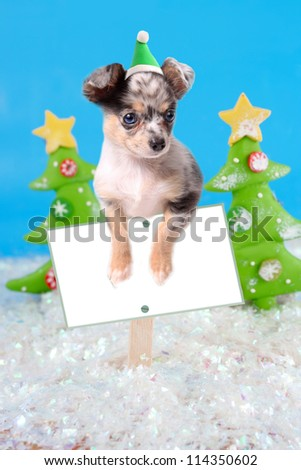 Cute little chihuahua dog wearing a santa hat hanging over a blank sign  board with christmas background