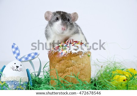 Cute little decorative rat near the Easter cake.