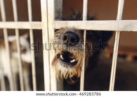 cute little dog puppy howling in shelter cage, sad emotional moment, adopt me concept, space for text