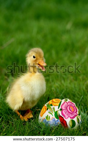 Cute little duckling and easter eggs in grass