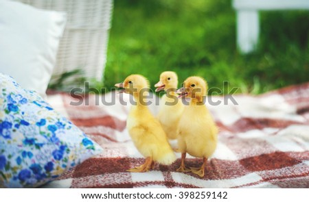 Cute little duckling over green natural background. - stock photo