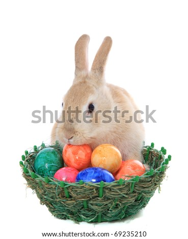 Cute little easter bunny with basket full of colored eggs. All on white background. - stock photo