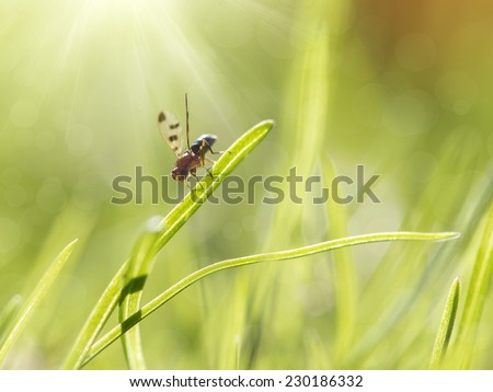 cute little fly on the grass in the morning basking in the sun
