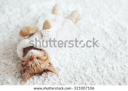Cute little ginger kitten wearing warm knitted sweater is sleeping on the white carpet - stock photo