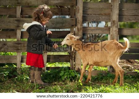 cute little girl feeding goat in the garden - stock photo