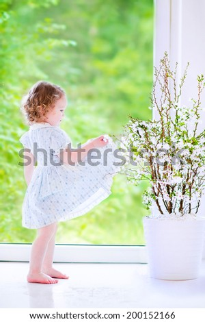 Cute little girl, funny toddler with curly hair wearing a blue festive dress, playing and dancing at a cherry blossom tree at home in a white sunny living room with a big garden view window - stock photo