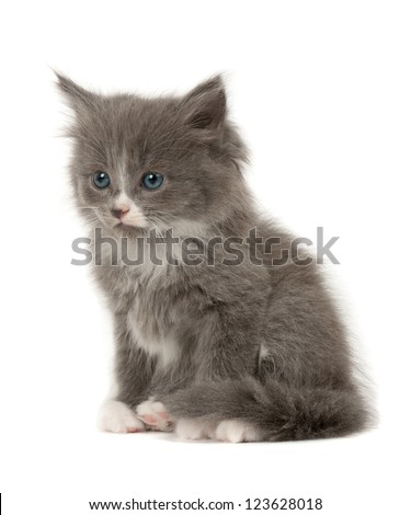 Fluffy White And Grey Cat Cute Little Gre...
