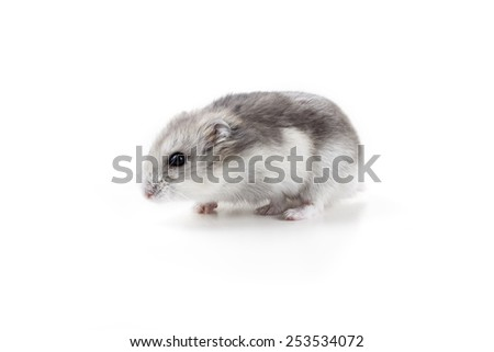 cute little hamster sitting - stock photo
