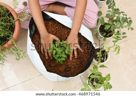 Cute little hands of Indian girl/kid gardening/farming in her balcony, Kerala India . Asian child/daughter creating green world/city. act/Go green/save earth. organic vegetable garden in grow bag.