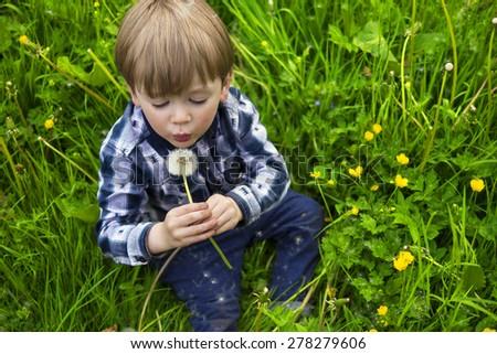 cute little kid holding a dandy lion - stock photo