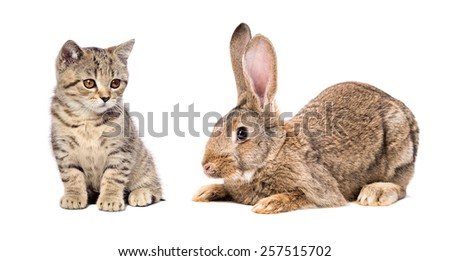 Cute little kitten and rabbit sitting together isolated on white background - stock photo