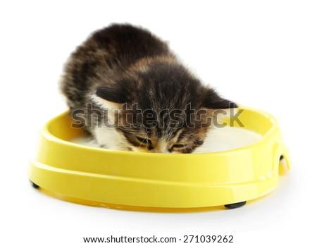 Cute little kitten drinks milk, isolated white - stock photo