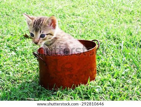Cute little kitten in a red pot - stock photo