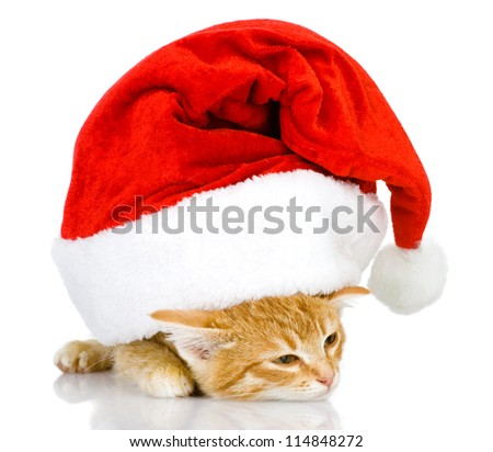 cute little kitten in red christmas Santa hat, isolated on white background - stock photo