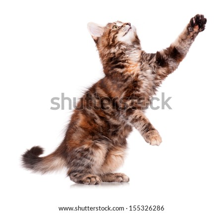 Cute little kitten, isolated on white background  - stock photo
