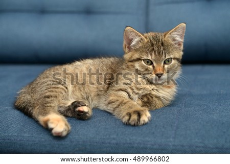 Cute little kitten lying on sofa closeup, small depth of field