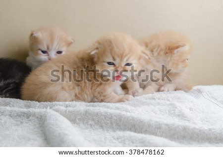 Cute little kitten lying towel, on sofa
