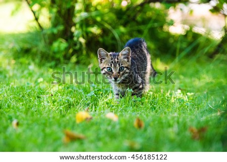 Cute little kitten on green grass