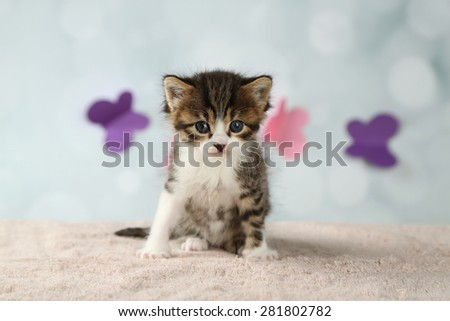 Cute little kitten on light background - stock photo