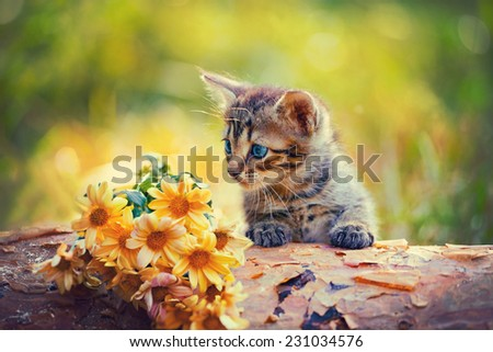 Cute little kitten outdoor looking at flowers on wooden snag - stock photo