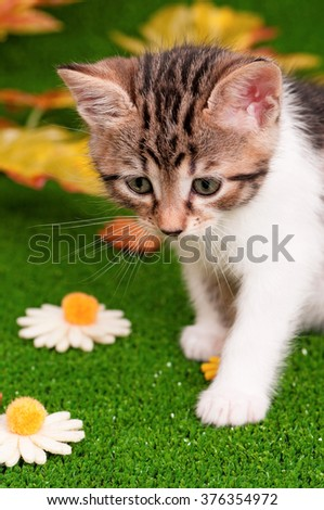 Cute little kitten playing on artificial green grass - stock photo