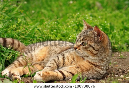 Cute little kitten playing on the grass close up - stock photo