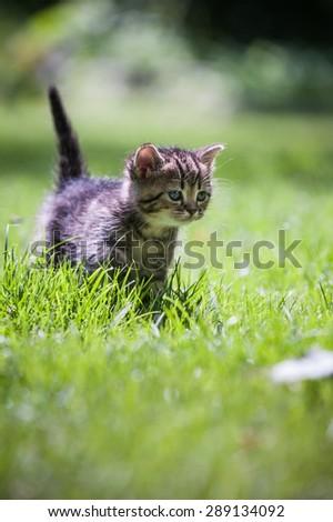 Cute little kitten running through the green lawn vertical - stock photo
