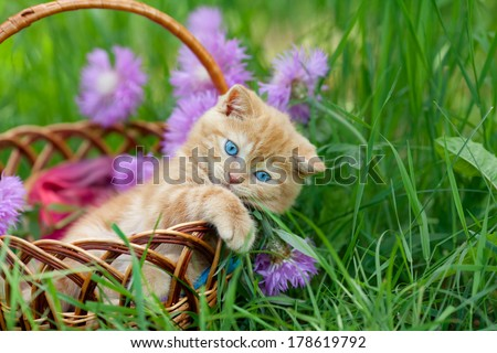Cute little kitten sitting in a basket on the floral lawn - stock photo