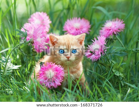Cute little kitten sitting in flower meadow - stock photo