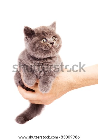 cute little kitten sitting on the palm of a man, isolated against white background