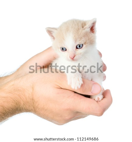 cute little kitten sitting on the palm of a man. isolated on white background