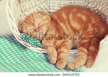 Cute little kitten sleeping in a basket - stock photo