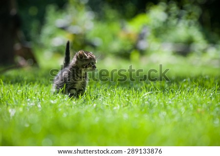 Cute little kitten standing on green grass looking to the left  - stock photo