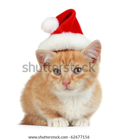 cute little kitten wearing red christmas Santa hat, isolated on white background - stock photo