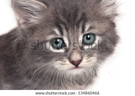 Cute little kitten with a sad look over white background close-up - stock photo