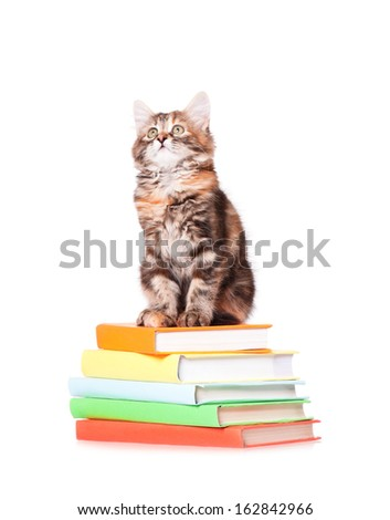 Cute little kitten with books over white background - stock photo