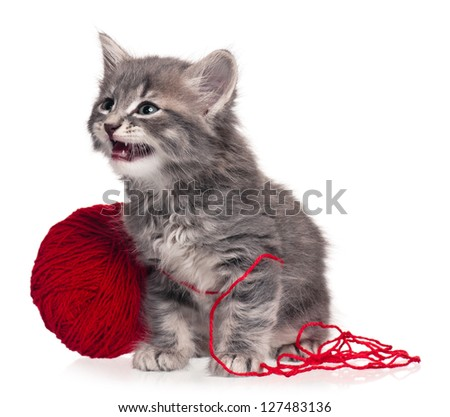 Cute little kitten with red yarn hank isolated on white background - stock photo