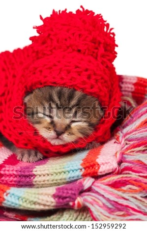 Cute little kitten wrapped up in a warm knitted scarf - stock photo